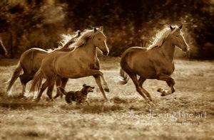 fine-art-print-horses-running-1012